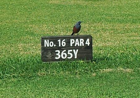 ゴルフ場での1コマ